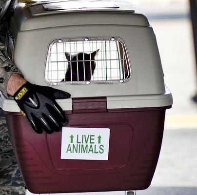 Transport von Haustieren bei Reisen